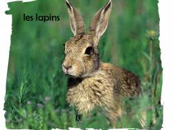 lapin-06-modifie-1.jpg